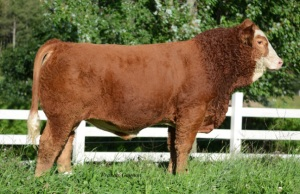 Sire: FGAF WowEffect - Pictured at 9 months